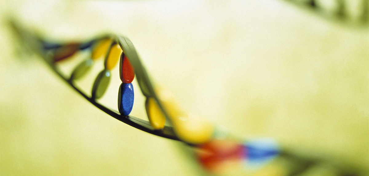 Médecine prédictive, hélices d'ADN