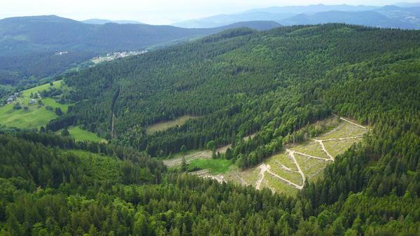 vue aérienne de forêt