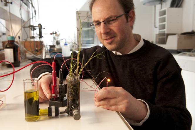 Pile à combustible microbiologique à plante.