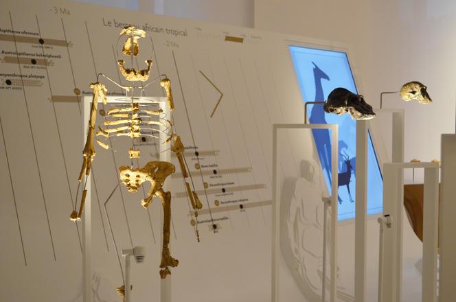 Lucy au Musée de l'homme