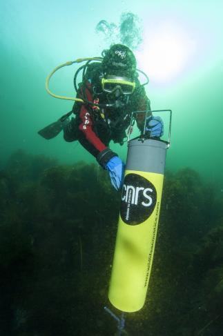 Hydrophone sousmarin