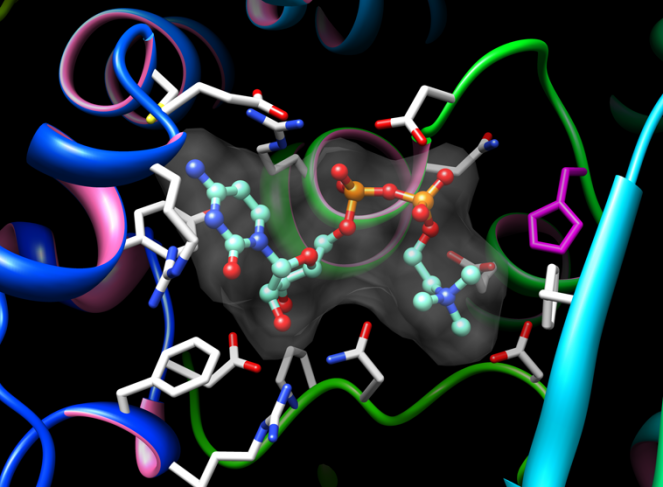 Structure de l'enzyme de Legionella pneumophila