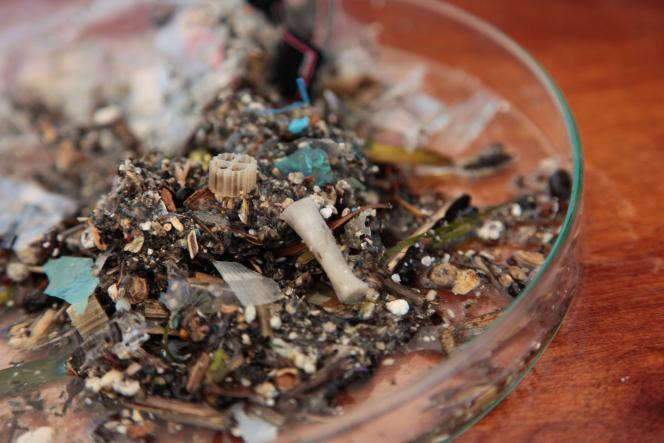 Échantillons de débris récoltés à l'aide d'un filet bongo.