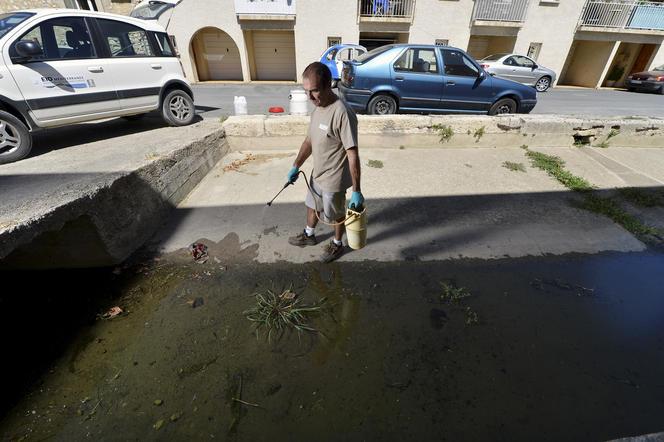 Lutte contre les moustiques dans le sud de la France