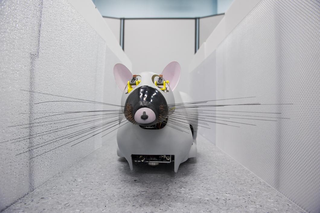Robot Psikharpax capable de distinguer une source sonore, ainsi que des objets ou des textures