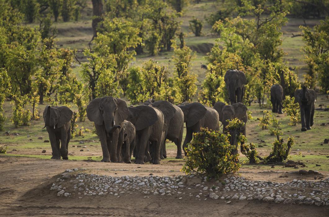 Éléphants dans le parc de Hwange