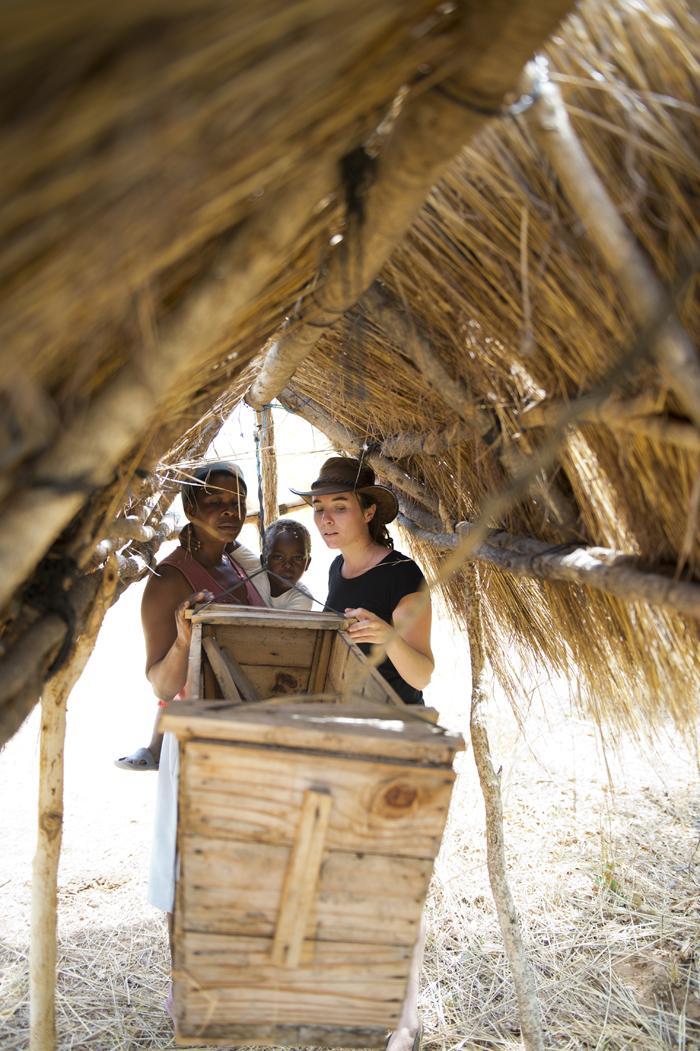 Barrières de ruches, village de Magoli, pour éloigner les éléphants