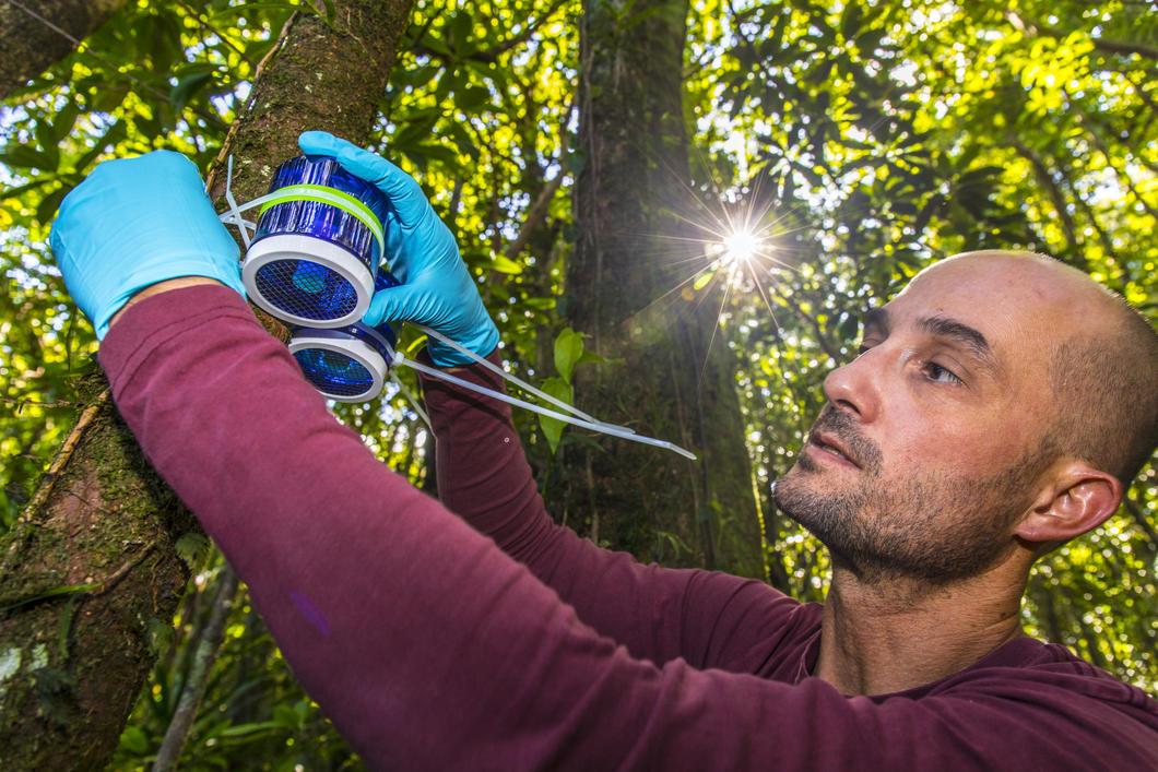 Ingénieur qui installe un capteur de mercure sur un arbre