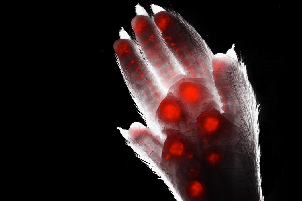 Main d'animal avec taches rouges qui brillent de l'intérieur