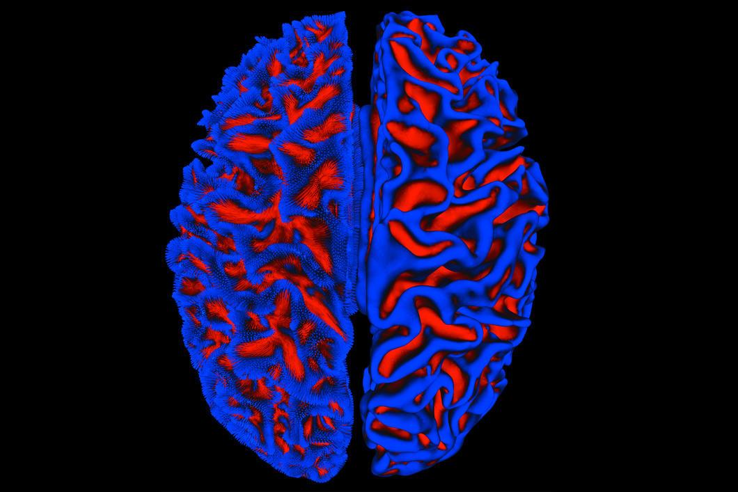 Vue du dessus d'une image de cerveau humain en bleu et rouge.