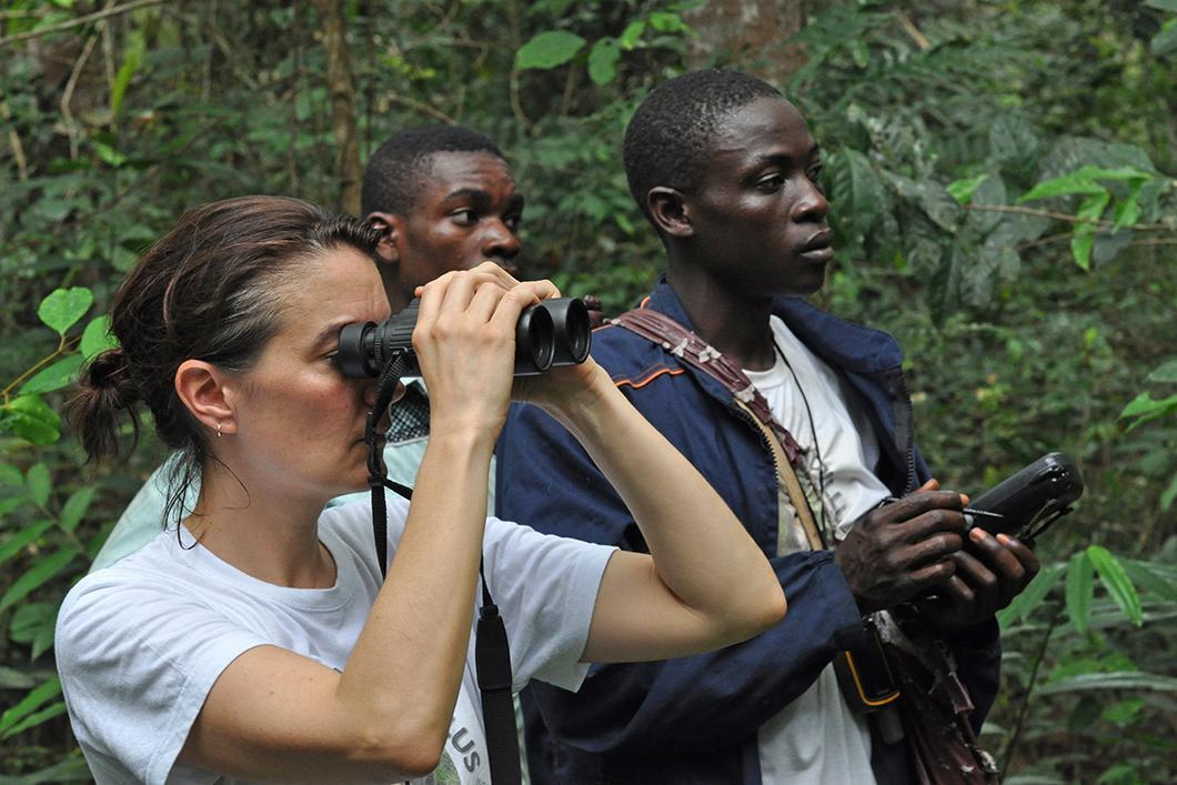 Observation de singes mandrills par la chercheuse Marie Charpentier