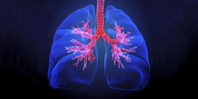 Poumons et bronches