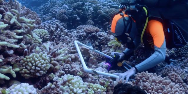 Plongeur qui étudie des coraux