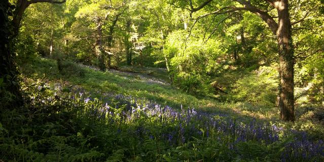 Dette climatique dans les forêts françaises
