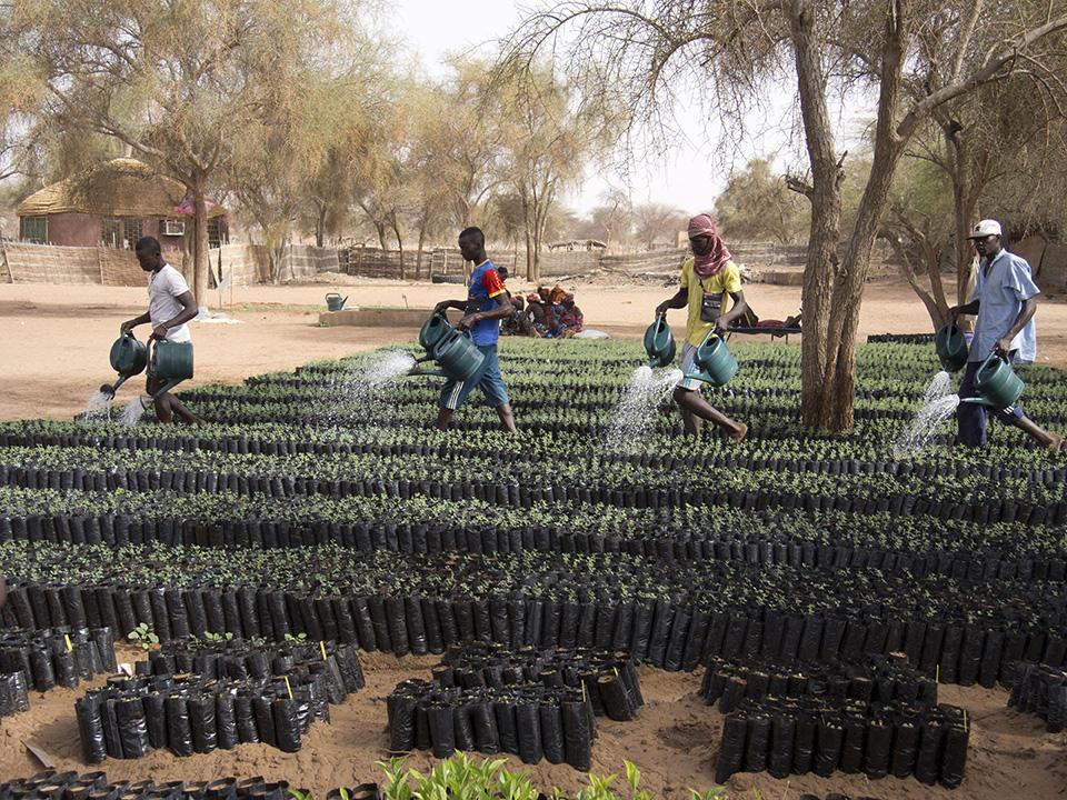 Grande muraille verte, Sahel