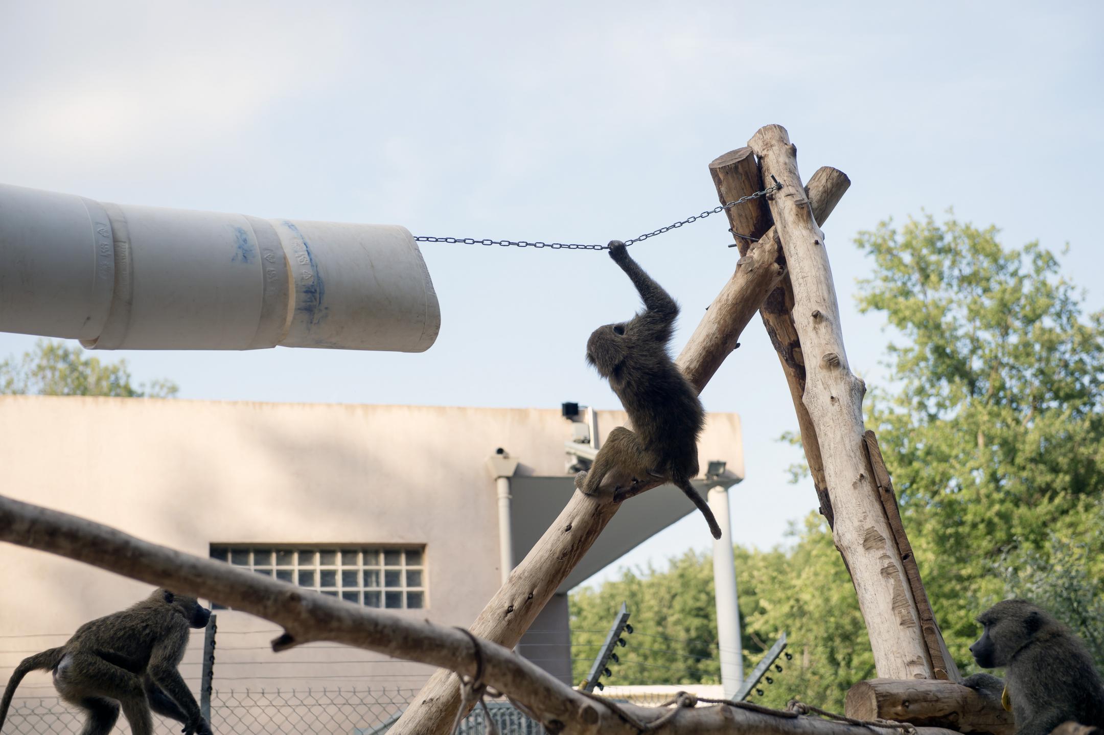 Parc animalier du Rousset.