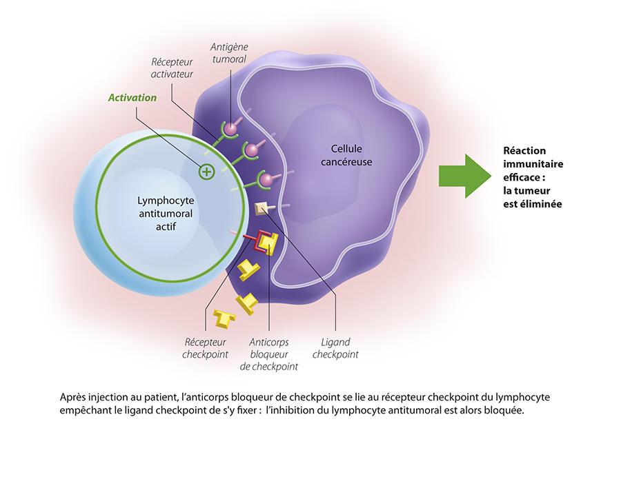 Immunotherapie Amelioree Cancer Immunothrapie Contre Le