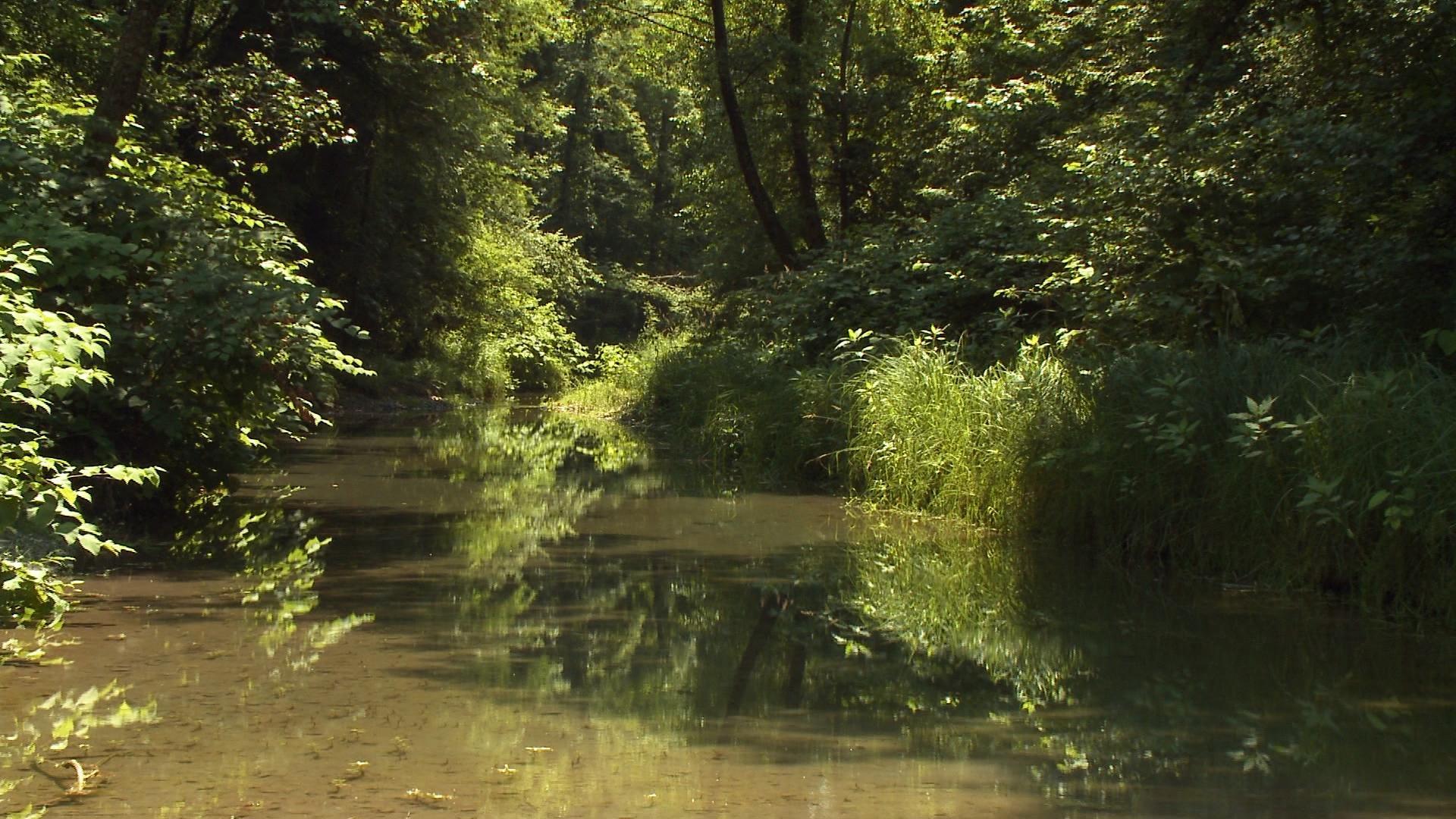 Rhône, la Lône des Luisettes