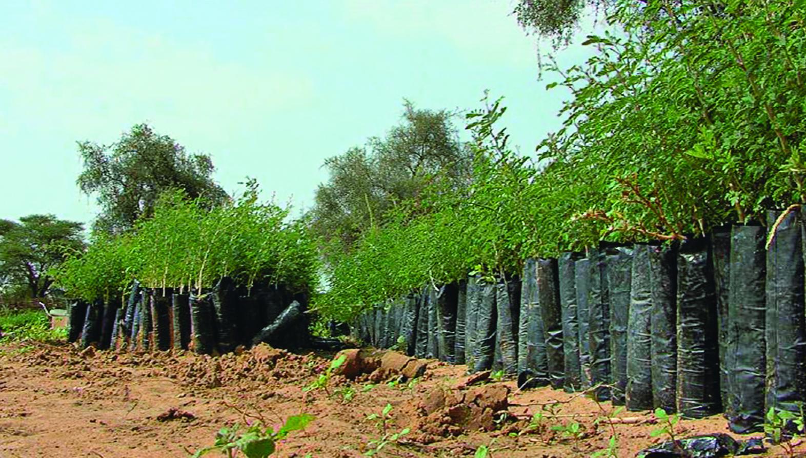 La Grande Muraille verte, en Afrique