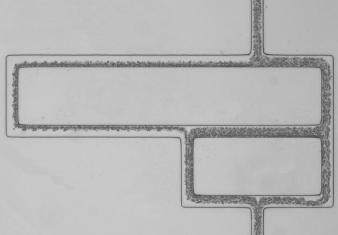 Modélisation du réseau capillaire