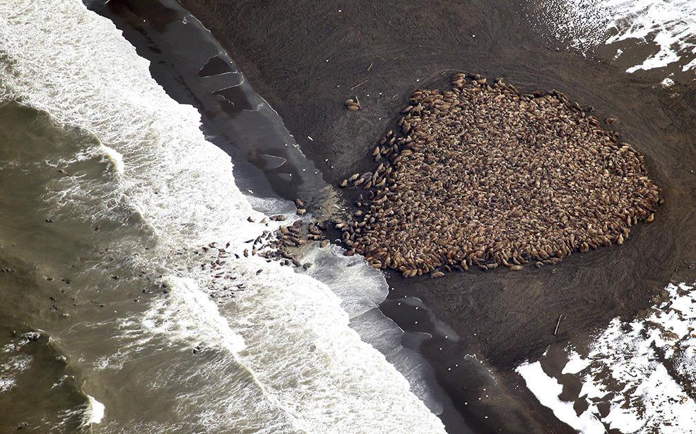 Pollution sonore et faune marine