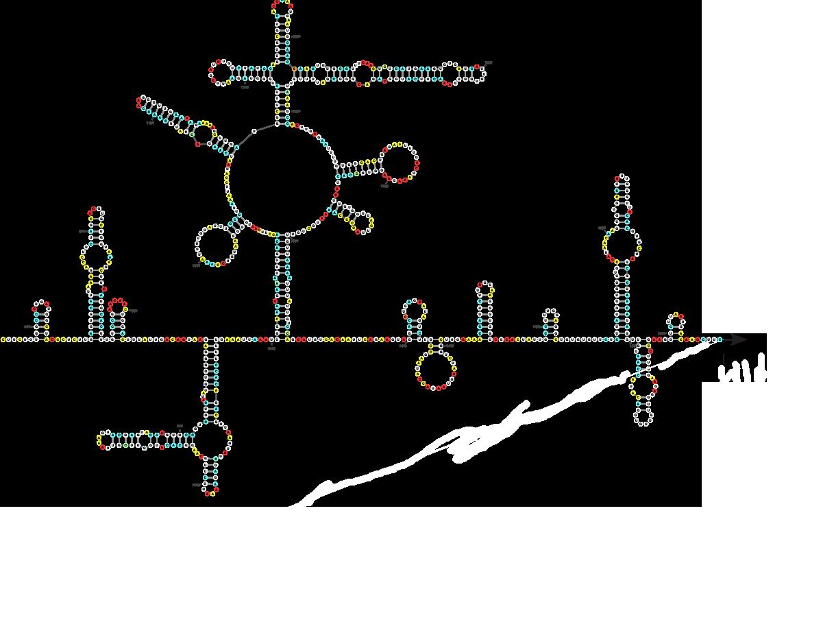 Représentation schématique d'une partie du génome du SARS-CoV-2