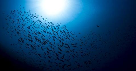 Océan Pacifique, Polynésie française