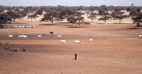 Saison sèche au Nord du Sénégal