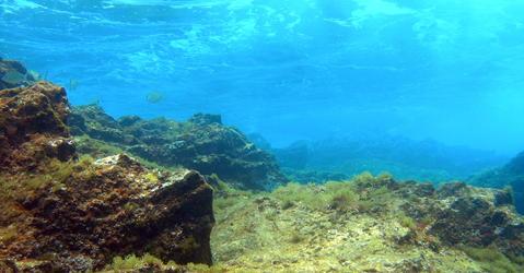 Image sous marine