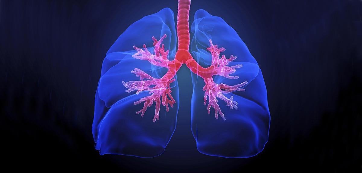 Voyage au cœur du poumon