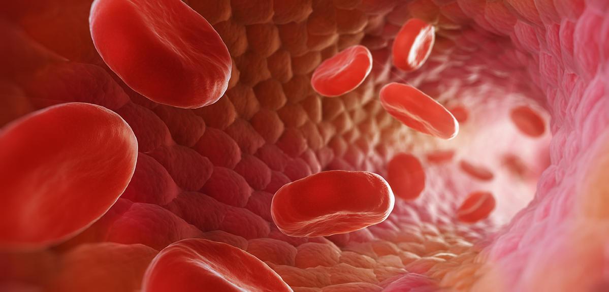 Ecoulements biologiques, réseau sanguin
