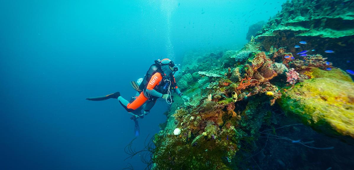 Tara : dernières nouvelles du corail