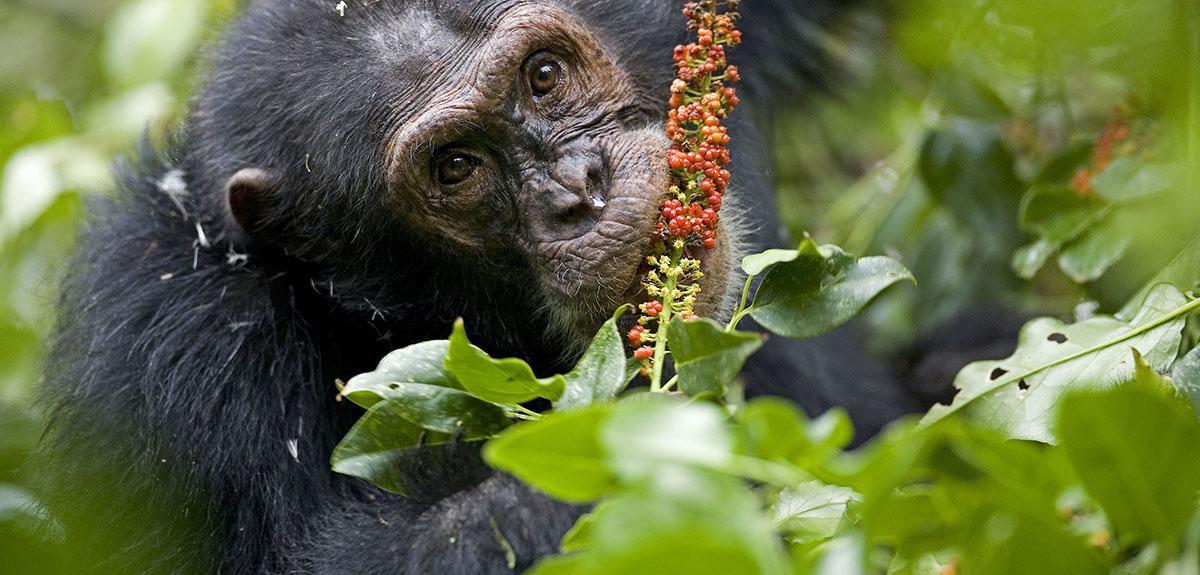 image animaux qui mange