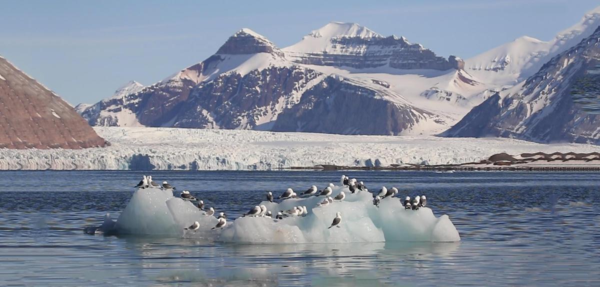 paysage arctique avec mouettes sur mini iceberg