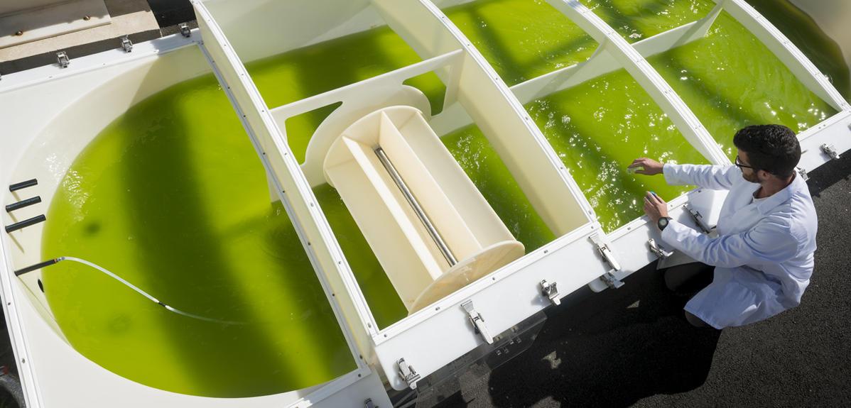 Microalgues: les coulisses d'une révolution