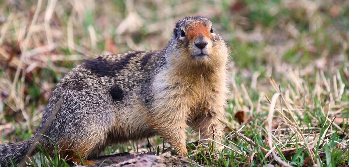 Ce que nous apprend le stress des écureuils
