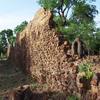 Ruines dans la forêt tropicale